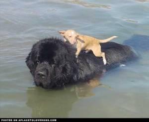 kindness animals