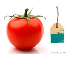 water footprint tomato