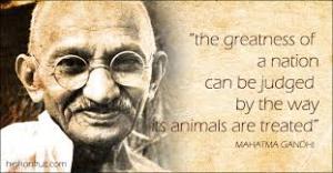 Ghandi quote veg