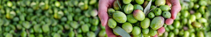 cropped-olive-female-hands.jpg
